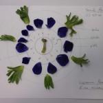 Beau diagramme de dissection florale